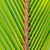 textures of green palm leaves stock photo © byrdyak
