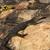 groot · monitor · hagedis · kanaal · water · gras - stockfoto © byrdyak
