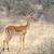retrato · belo · masculino · parque · animais · selvagens · reserva - foto stock © byrdyak