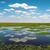 Sudafrica · campagna · foresta · erba · natura · panorama - foto d'archivio © byrdyak
