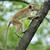 обезьяны · жизни · природы · стране · Шри · Ланка · ребенка - Сток-фото © byrdyak