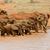 elefánt · nyáj · fiatal · perem · vad · Botswana - stock fotó © byrdyak