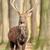 szarvas · ősz · erdő · fű · piros · fiatal - stock fotó © byrdyak