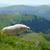 ovejas · escandinavia · valle · hierba · naturaleza - foto stock © byrdyak