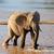 Afrika · filler · çalı · oyun · park · Namibya - stok fotoğraf © byrdyak