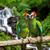 オウム · 熱帯 · 滝 · 緑 · 水 · 森林 - ストックフォト © byrdyak
