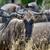 свет · Африка · Кения · дождь · зубов · лев - Сток-фото © byrdyak