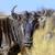grup · mavi · çalışma · Güney · Afrika · saç - stok fotoğraf © byrdyak