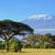 Kilimandzsáró · szavanna · Kenya · részben · felhők · naplemente - stock fotó © byrdyak