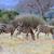 zebra · portret · baby · afrikaanse · milieu - stockfoto © byrdyak