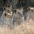 aslan · yürüyüş · Güney · Afrika · kafa - stok fotoğraf © byrdyak