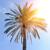 palm tree stock photo © byrdyak