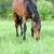 馬 · 実例 · 実行 · 日没 · 空 · 太陽 - ストックフォト © byrdyak