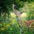 szarvas · őzgida · áll · mező · baba - stock fotó © byrdyak