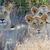 oroszlán · park · Kenya · Afrika · közelkép · macska - stock fotó © byrdyak