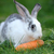 lapin · belle · animaux · sauvage · nature · bébé - photo stock © byrdyak