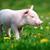 kismalac · tavasz · zöld · fű · farm · étel · baba - stock fotó © byrdyak