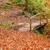 bridge in autumn forest stock photo © byrdyak