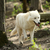 wild white wolf stock photo © byrdyak