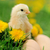 weinig · kip · gras · voorjaar · baby · ei - stockfoto © byrdyak