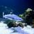 Карибы · акула · синий · океана · воды · морем - Сток-фото © byrdyak