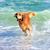 altın · köpek · plaj · sevimli - stok fotoğraf © byrdyak