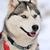 özenli · köpek · açık · havada · kar · renk - stok fotoğraf © byrdyak
