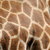 zsiráf · bőr · textúra · eredeti · bőr · fény - stock fotó © byrdyak