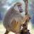 olive baboon stock photo © byrdyak