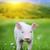 jovem · porco · grama · verde · primavera · prado · natureza - foto stock © byrdyak