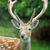 鹿 · バック · 自然 · 草原 - ストックフォト © byrdyak