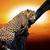 nagy · afrikai · fa · sziluett · naplemente · mező - stock fotó © byrdyak