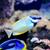коралловый · риф · воды · тропические · океана - Сток-фото © byrdyak