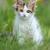 gato · verão · grama · mentiras - foto stock © byrdyak