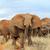 слон · парка · Кения · большой · Африка · ребенка - Сток-фото © byrdyak