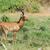 Güney · Afrika · kafa · doğa - stok fotoğraf © byrdyak