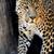 leopard · ciemne · twarz · charakter - zdjęcia stock © byrdyak