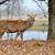 beyaz · geyik · hayvanat · bahçesi · genç · hayvan - stok fotoğraf © byrdyak