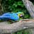 cute · paar · vogel · vrouw · gezicht · man - stockfoto © byrdyak