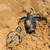 geboorte · zee · schildpadden · illustratie · schildpad · eieren - stockfoto © byrdyak