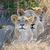 zárt · oroszlán · park · Kenya · Afrika · macska - stock fotó © byrdyak