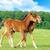 кобыла · матери · лошади · фермы · центральный · Кентукки - Сток-фото © byrdyak