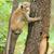monkey in the living nature stock photo © byrdyak