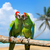 Parrot (Severe Macaw) on branch on tropical background  stock photo © byrdyak