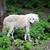arktik · kurt · kuzey · köpek · kar · buz - stok fotoğraf © byrdyak