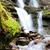 waterfall in forest stock photo © byrdyak