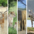 african animals stock photo © byrdyak