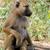 olive baboon in masai mara national park of kenya stock photo © byrdyak