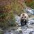 niedźwiedź · brunatny · relaks · kamień · spać - zdjęcia stock © byrdyak