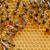 view · lavoro · api · oro · ape - foto d'archivio © byrdyak